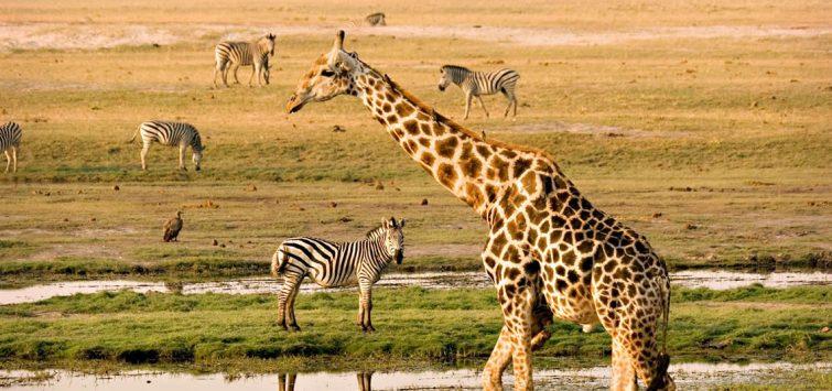 3 Days Kenya Masai Mara Safari from Kisumu4