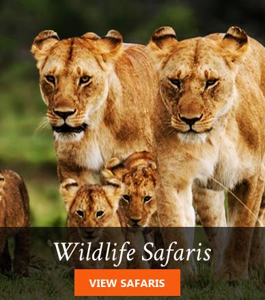 Kenya wildlife safari packages