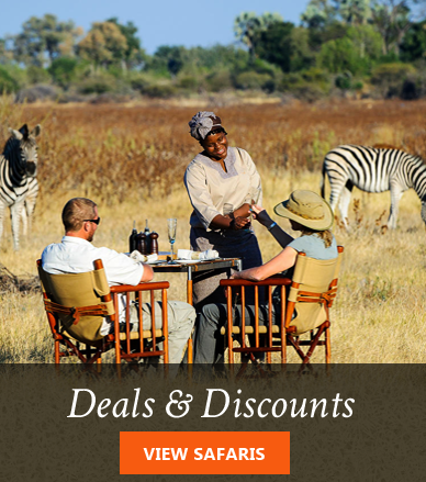 Africa safaris special offers deals and discounts