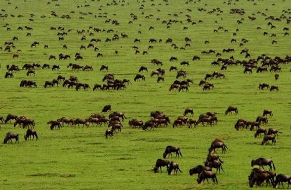 Serengeti - Masai Mara Migration Safari