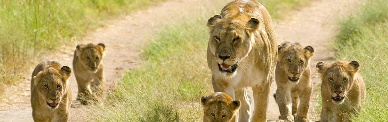 safari to masai mara from Kisumu