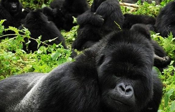 001 - 13 Days Uganda Grand Safari3