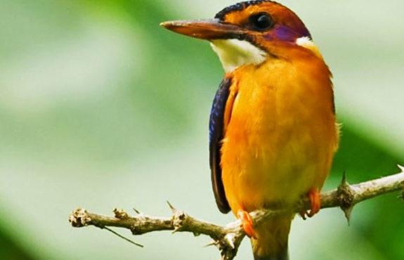 kenya birding package
