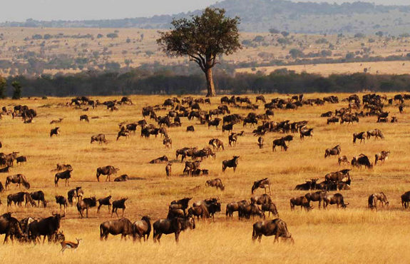 001 -Victoria Falls Masai Mara Serengeti - safari