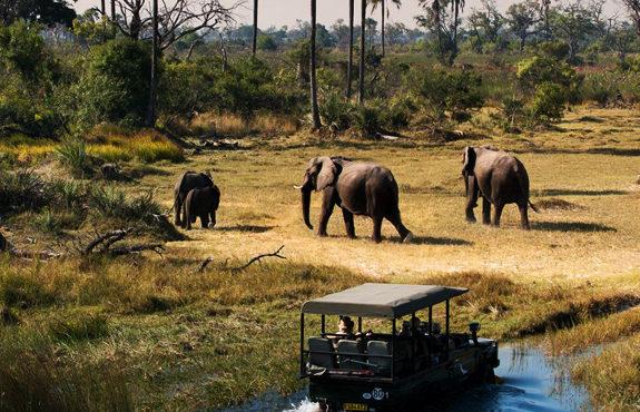001 okavango-delta-safari-game-drive-botswana