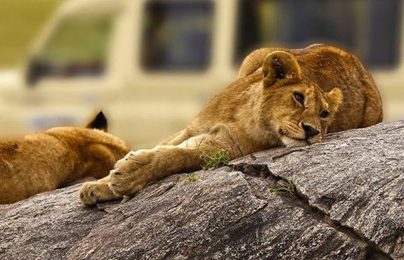 Tanzania-Photography-Safari