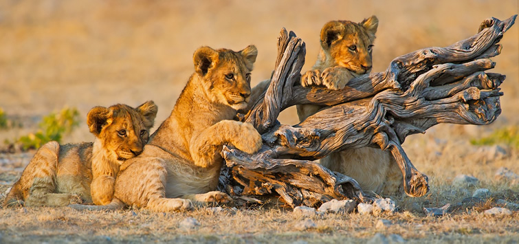 luxury africa safari packages
