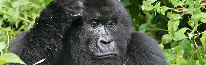 kenya tanzania rwanda tour