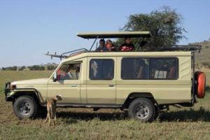 Closed-side Safari Land Cruiser
