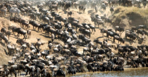 serengeti-masai mara migration