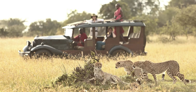 Cottas camp game drives