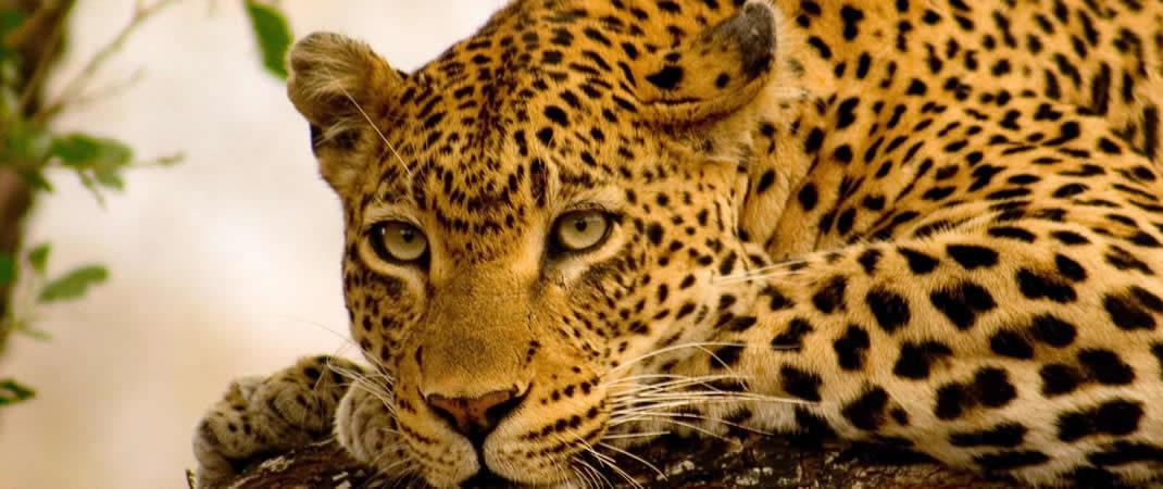 Kenya Tanzania Safari Planning