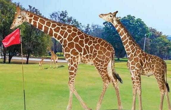 kenya golf safari