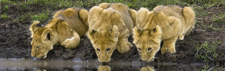 10 Days Kenya Safari And Rwanda Gorillas Small Group