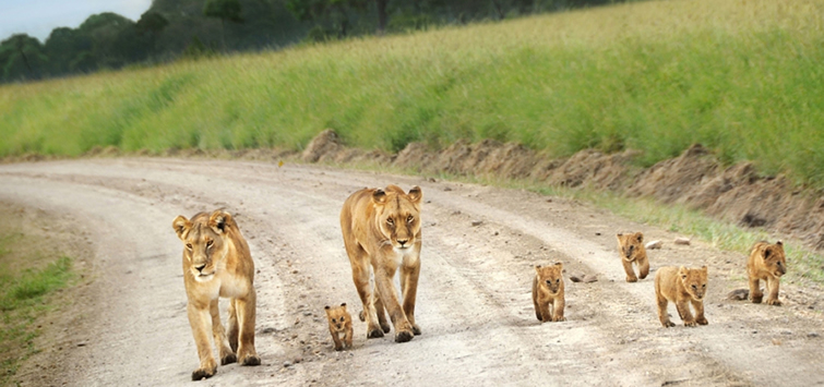 Best African Safari For Solo Travelers
