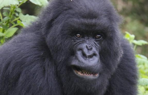 rwanda-tanzania safari