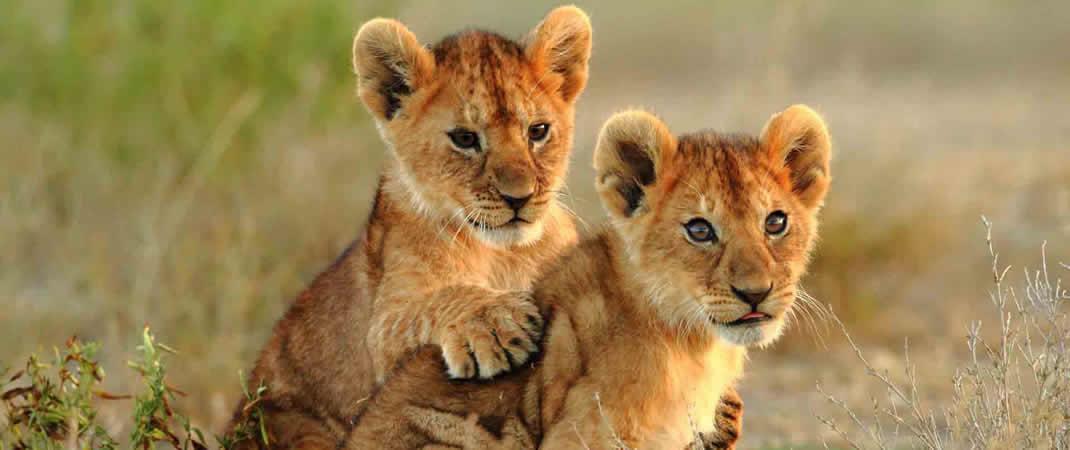 unique Kenya Safari Holidays