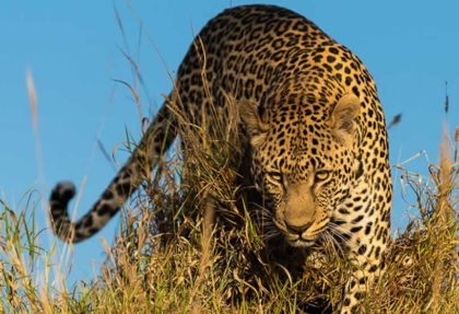 Best African Safari Vacation Packages | African Travel Hub