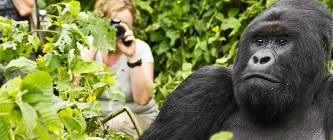 mountain gorilla tours