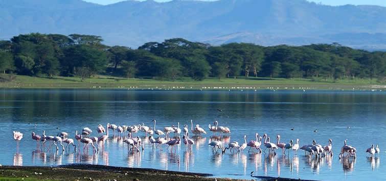 Lake Naivasha Boat Tours