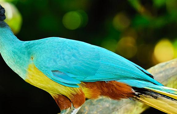 Kakamega Rain Forest Tours
