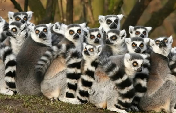 madagascar tour packages