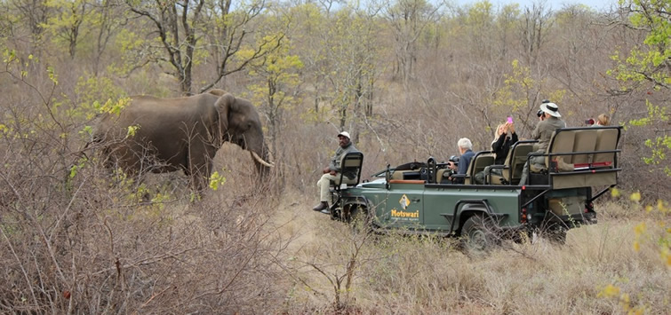 Safaris in Kruger park