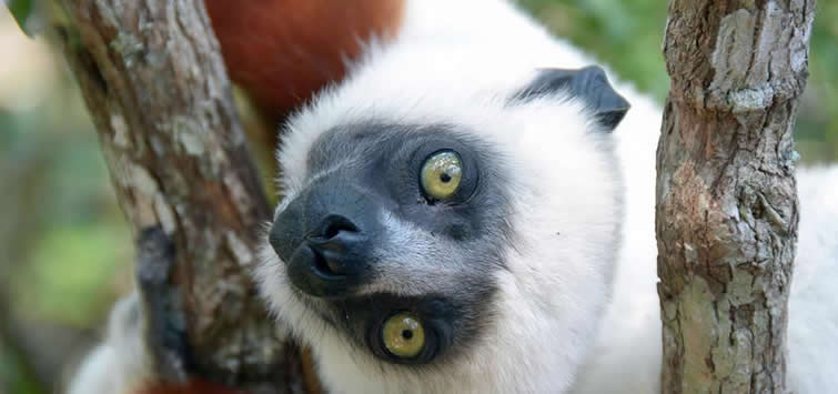 madagascar tours and trips