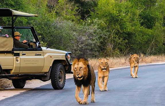 15 Days South Africa Grand Safari