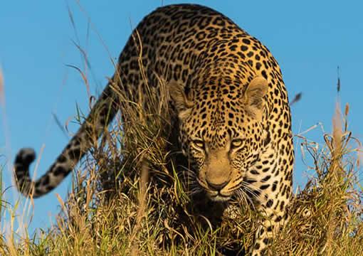 Kenya and Tanzania Safaris and Tours