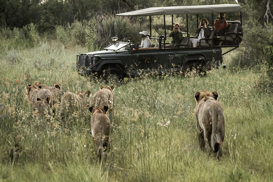 Open-Side Safari Jeeps - Types of Safari Vehicles in Africa